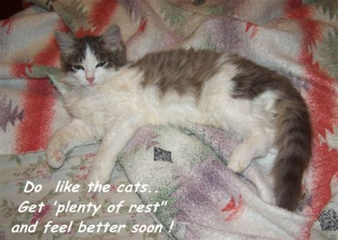 get well soon kitty. free get well soon ecards, greeting