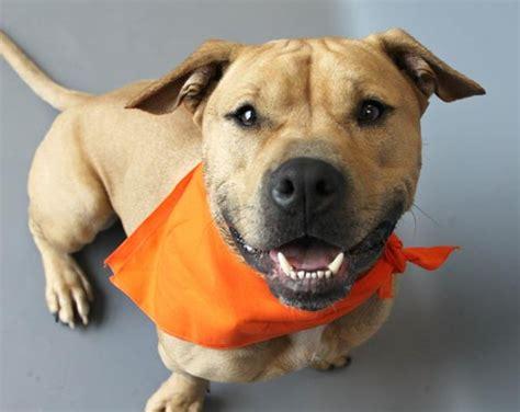 puppy adoption pittsburgh pet adoption resources features pittsburgh pittsburgh city paper