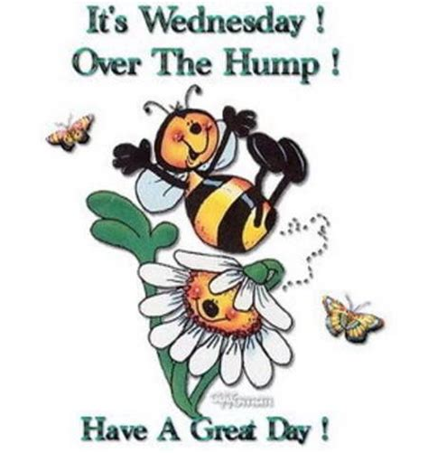 it's wednesday over the hump have a great day! pictures