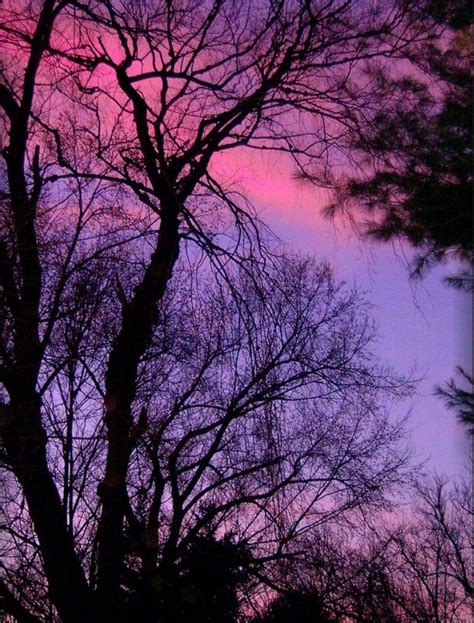 pink and purple tree pink and purple sunset and trees screensavers