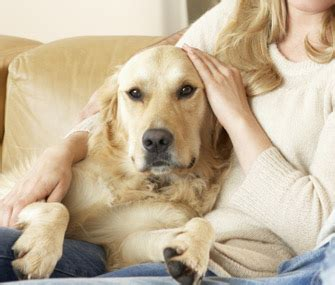 dogs cuddling signs you your more than your spouse