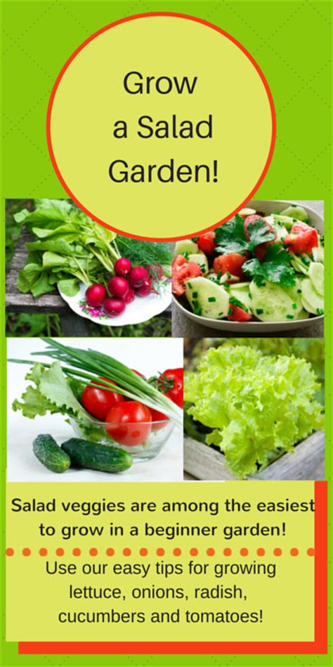 Beginner Vegetable Garden Layout Beginner Vegetable Garden Free Plans Pictures And Worksheets