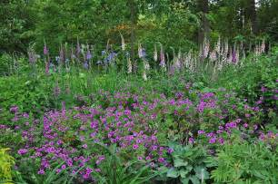gardening with john steedman plants for shade