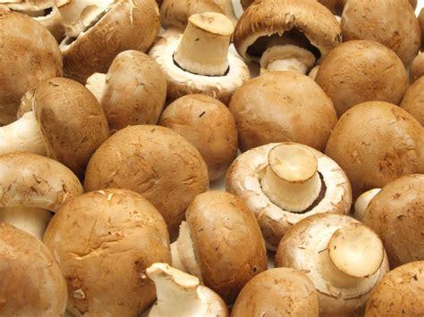 cucinare funghi coltivati ricette con funghi chignon