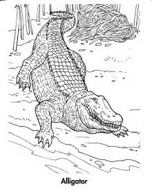 Pics Photos  Crocodile Coloring Pages For Kids Animal sketch template