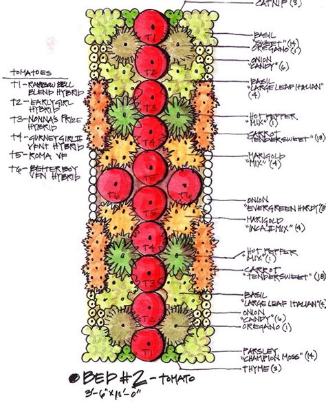 Companion Garden Layout Pin By Barrett On Gardening Pinterest