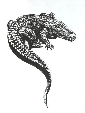 tribal gator tattoo alligator sketch design pinteres