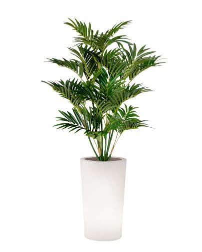 vaso pianta noleggio pianta palma ecologica per eventi noleggiodesign