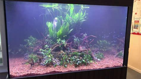 xx  planted aquarium part  youtube