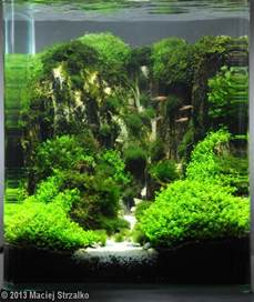 Aquascape Pictures by 2013 Aga Aquascaping Contest 600