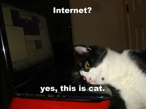 Cat Laptop Meme - cat meme quote funny humor grumpy computer internet