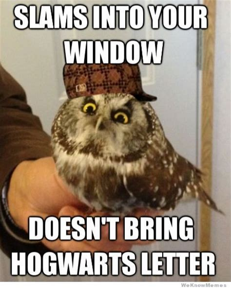 Who Owl Meme - scumbag owl meme memes pinterest owl and meme