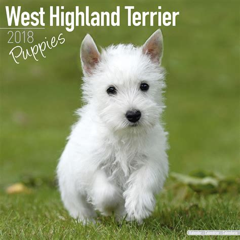 west highland terrier puppies west highland terrier puppies calendar 2018 pet prints inc