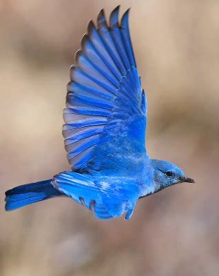 tutus, bluebirds and the love of dance | tutu love