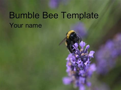 bee powerpoint template bumblebee powerpoint template