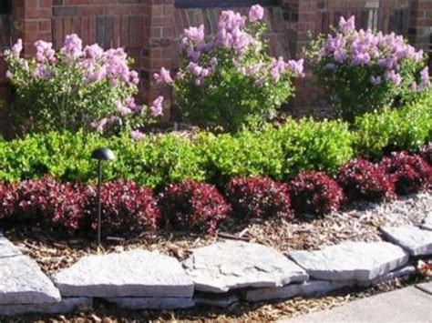 landscaping hedges and bushes trees tennessee and shrubs