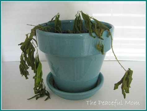 how to bring a dead plant back to life how to bring a dead plant back to 28 images 1000