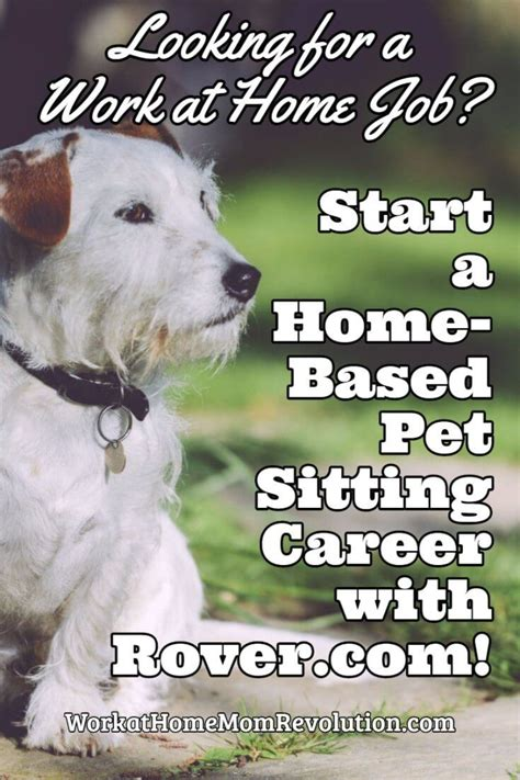 dog house sitters 25 best ideas about pet sitting business on pinterest