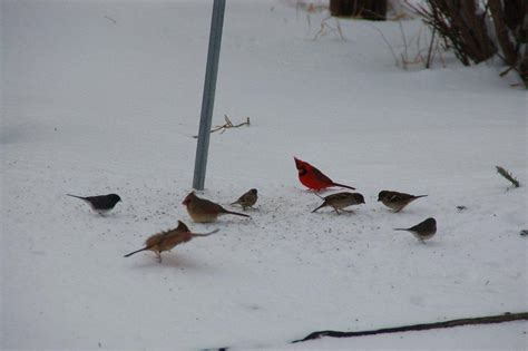 feeding backyard birds winter bird feeding iowa wildlife federation