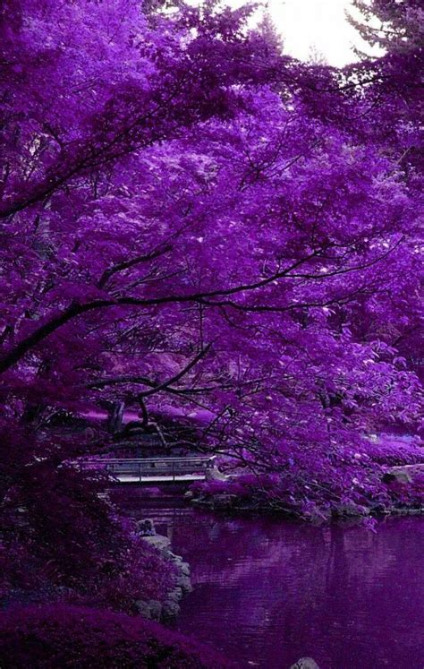 best colors with purple 851 best inspire purple colour texture images on