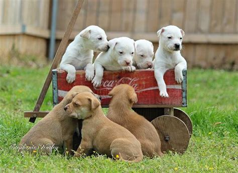 free puppies in shreveport puppies free to home for sale