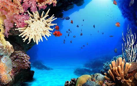 imagenes sorprendentes del oceano oceano dibujo imagui
