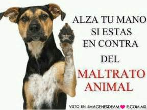 no maltrato animal no al maltrato animal hagamos eco
