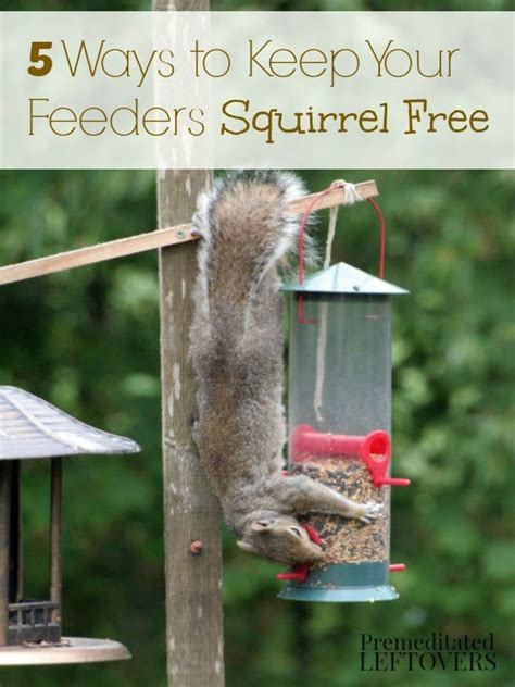 17 best 1000 ideas about squirrel proof bird feeders on