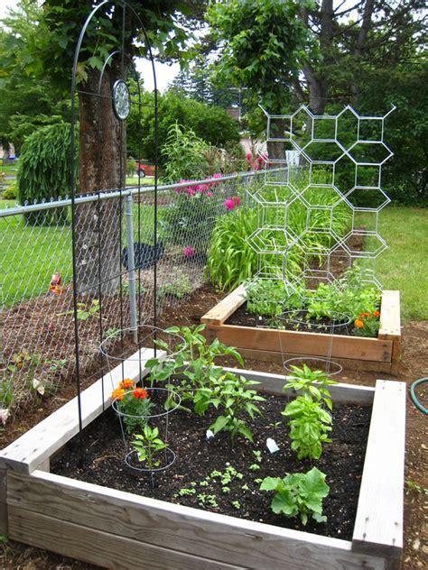 trellis gardens how to make tomato ladders from the ikea salvia trellis