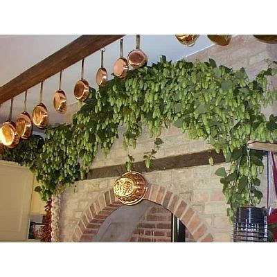 hops garland   Hops to It!   Hops wedding, Decor, Garland