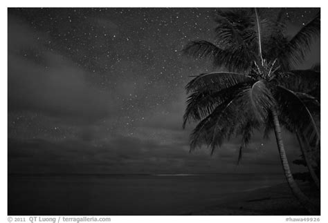 Hawa Acean Colour black and white picture photo palm tree and