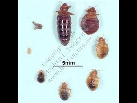 bed bug exterminator nj bed bug prevention and identification bernardsville nj 732