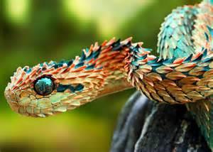 Rarest In The World Top 10 Rarest Animals