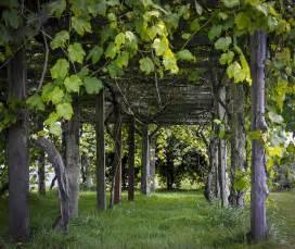 Grapevine Pergola by Grape Arbor Pergola Plans Pdf Woodworking