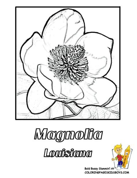states flower coloring pictures hawaii louisiana