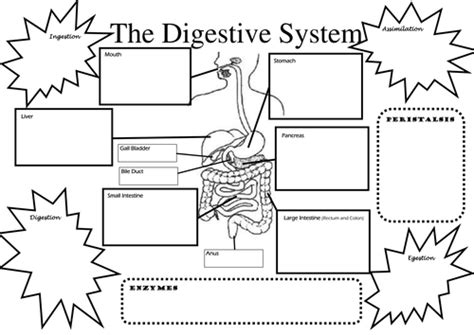 the system for part 4 doc lessons in betty neels happily after volume 4 books structure and function of digestive system by