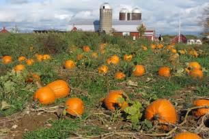 Pumpkin Patch Your Own Pumpkins At Our Saratoga Farm