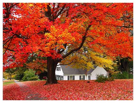 fall house home decorating recommendations for fall and winter seasons