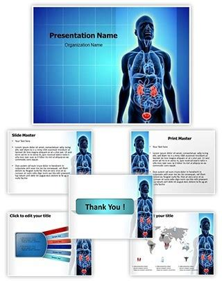 powerpoint templates urinary system professional urinary system editable powerpoint template