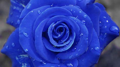 Weiß Blühende Blumen by Die 73 Besten Blaue Hintergrundbilder