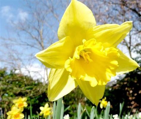 spring home tips spring home maintenance tips rpm midwest