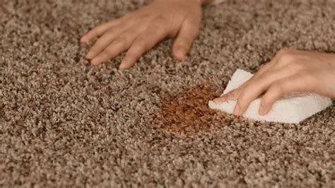 how to clean rug stains ways to get rid of carpet mold international inside
