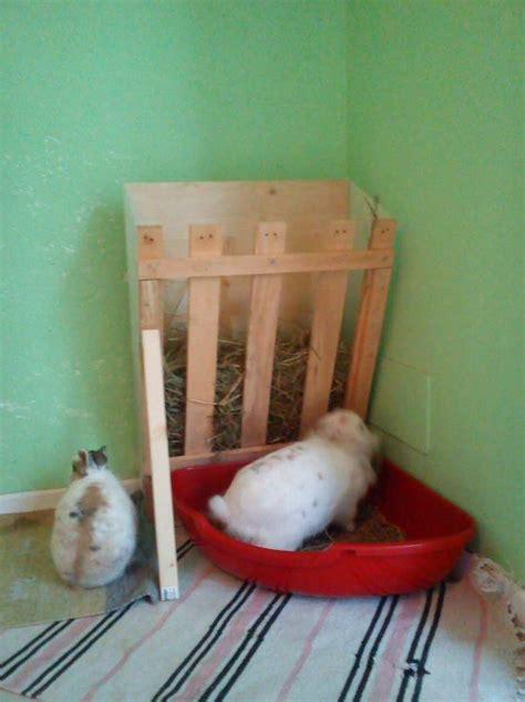 lettiere per conigli nani abituare un coniglio alla lettiera house rabbit society