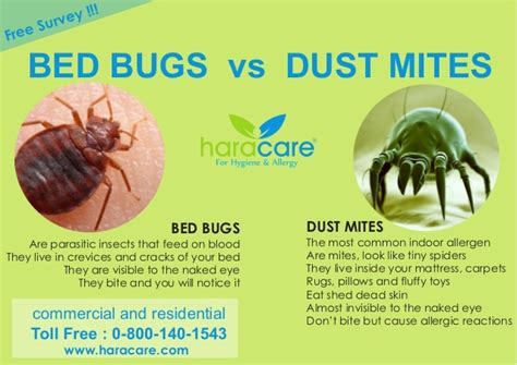 dust mites vs bed bugs bed bugs vs dust mite
