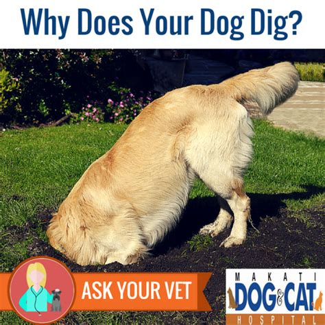 why do dogs dig holes in the backyard why do dogs dig holes in the backyard 28 images why
