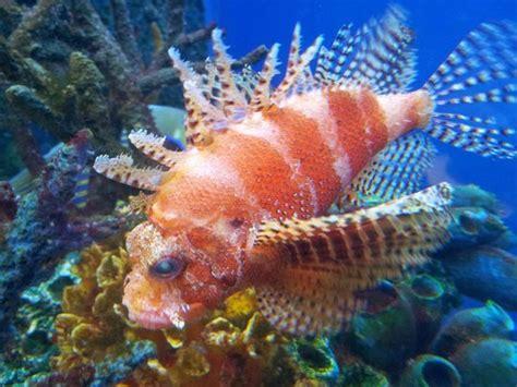 hello picture of aquarium du city tripadvisor