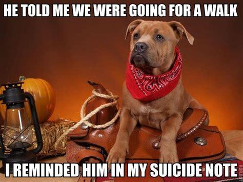 Dog Vet Meme