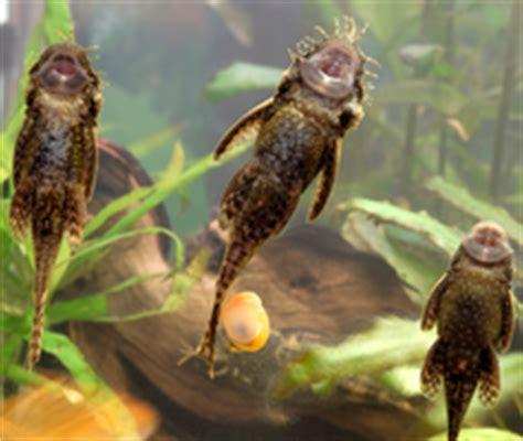 poisson nettoyeur ooreka