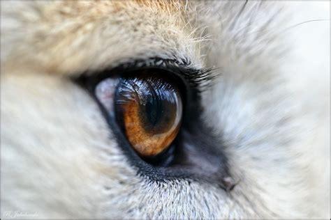 wolfsauge forum fuer naturfotografen