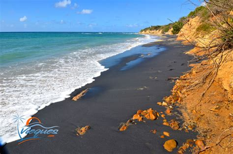 black beaches vieques playa negra negrita black sand beach puerto rico
